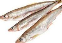 Как выглядит корюшка, фото рыбы