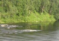Какая рыба водится в Мурманске