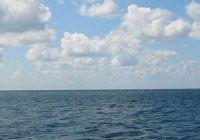 Какая рыба водится в Азовском море