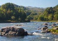 Какая рыба водится в Алтайском крае
