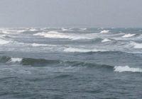 Какая рыба водится в Северном море