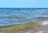 Какая рыба водится в Каспийском море