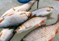 Советы по выуживанию рыбы